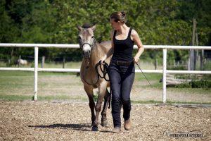Pferdetraining Folgen