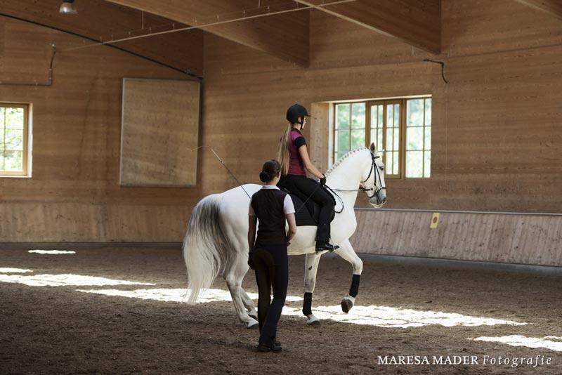 Unterricht über das Fühlen einer korrekten Piaffe auf Stiftungspferd Generale Cassa, einem Kladruberwallach, von Vera Munderloh ausgebildet