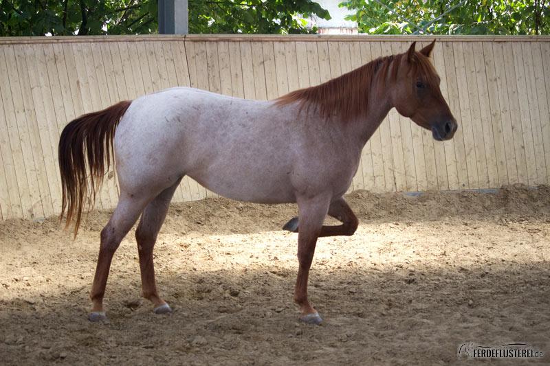 Eigenes pferd kennenlernen