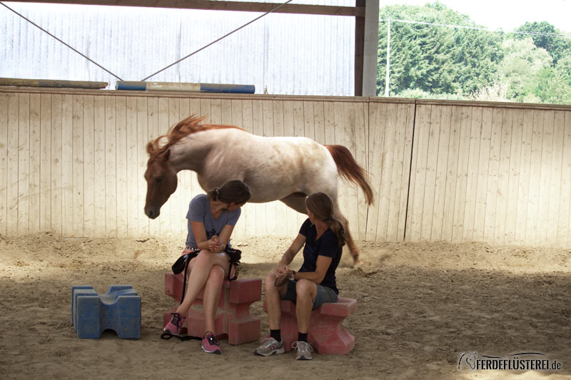 neues pferd kennenlernen)