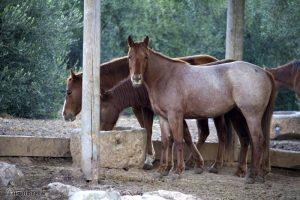 Pferd auf Koppel