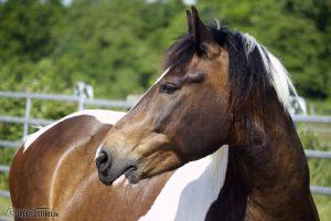 Pferd schaut zufrieden