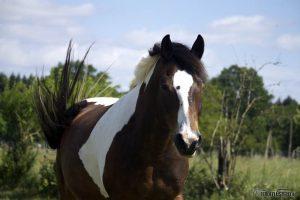 Friedensvertrag mit dem Pferd