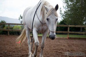 Pferd läuft zu