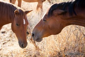 Pferde in der Herde