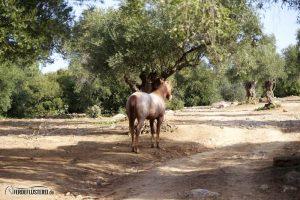 Pferd hinten