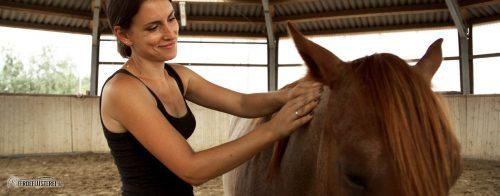 Pferdemassage richtig