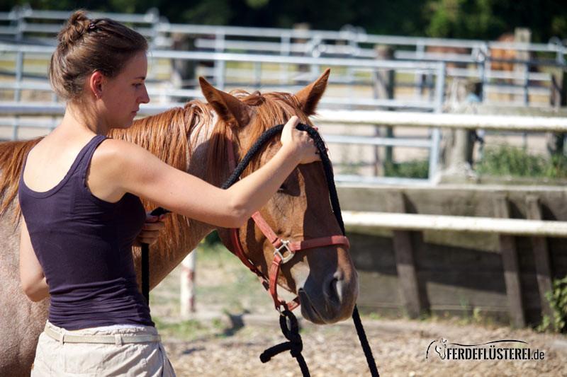 Bodenarbeit: Wann Tierversuche mit dem Pferd super sind 5