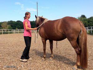 Bodenarbeit mit Horsemanship