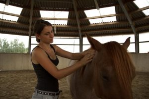 Pferdemassage richtig machen