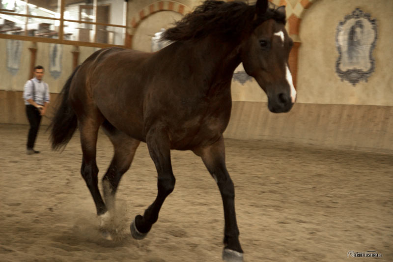 Arien Aguilar & Next Generation: Sanftes Horsemanship
