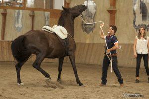 Miron Bococi Horsemanship