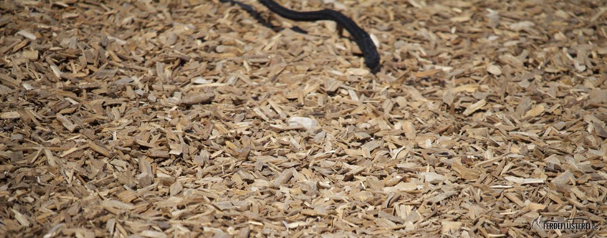 Bodenarbeit Seil