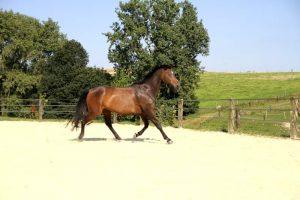 Pfridolin Pferd mit Power