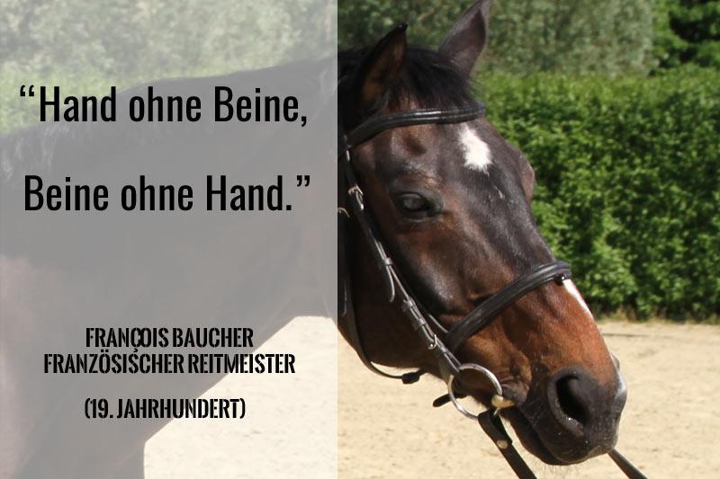 Pfridolin Pferd und Baucher