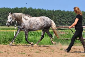 Wege zum Pferd Longieren