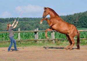Wege zum Pferd Freiheitsdressur