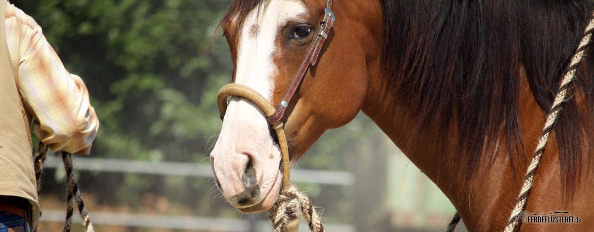 Paul Dietz Horsemanship