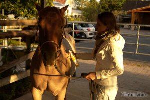 Schweifpflege beim Pferd