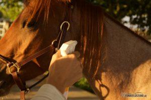 Mähnenspray beim Pferd