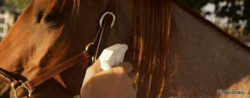 Richtige Fellpflege beim Pferd