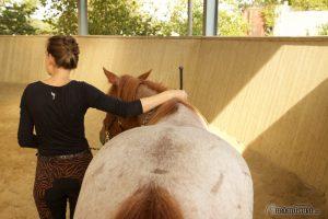 Pferdetraining am Boden