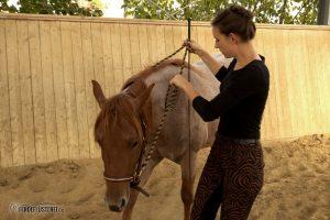Bodenarbeit mit dem Pferd - Zügelhilfen