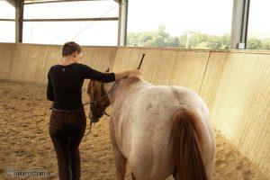 Bodenarbeit mit dem Pferd