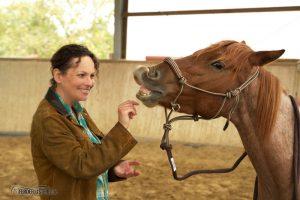 Knotenhalfter Pferd