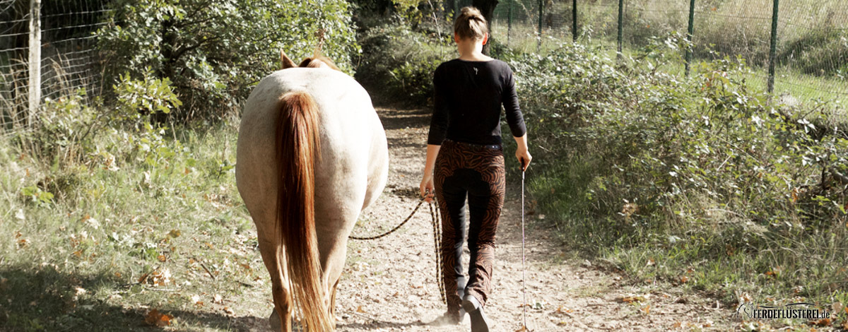 Spazieren gehen mit dem Pferd - Signorinetta Reithosen