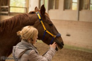 Abkauen beim Pferd