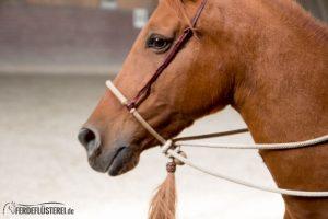 Gebisslos Reiten: Mit dem Bosal pferdefreundlich bis zur höchsten Versammlung 7