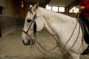 Bosal an Pferdenase