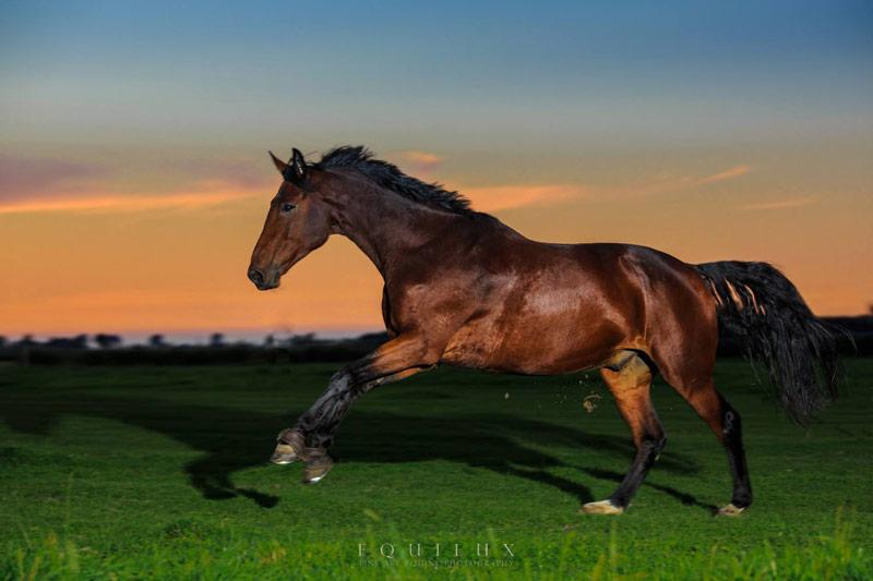 Foto: Philipp von Bassi - Pferdefotografie