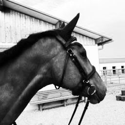 Pferd mit Zaumzeug