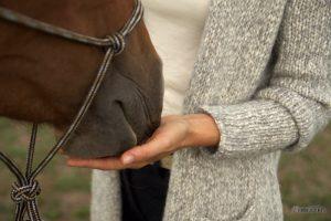 Pferd legt Nase in Hand