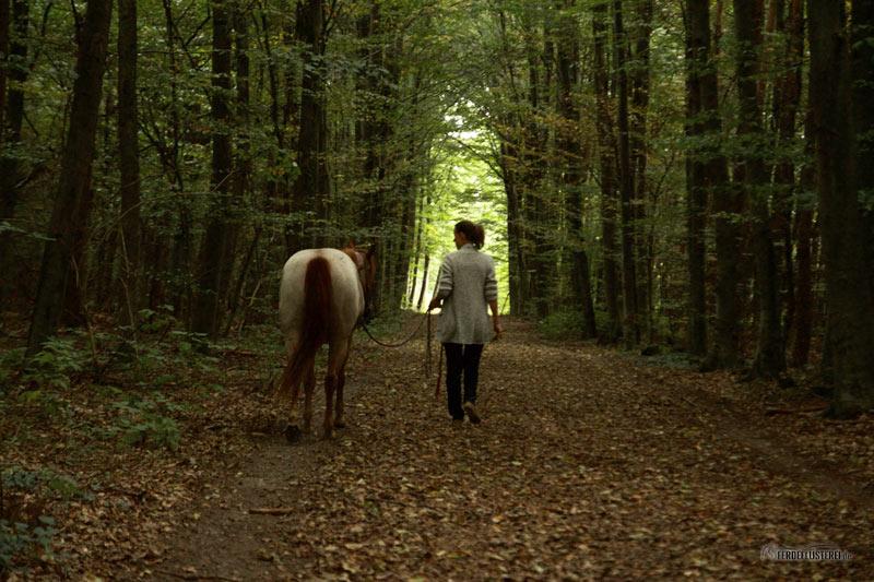 Spazieren gehen mit dem Pferd
