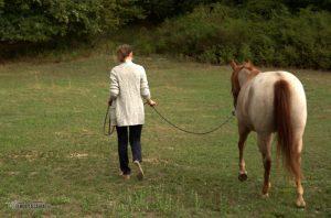 Mehr Sicherheit mit dem Pferd