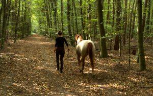 Spaziergang mit dem Pferd im Wald