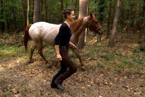Training im Gelände mit dem Pferd