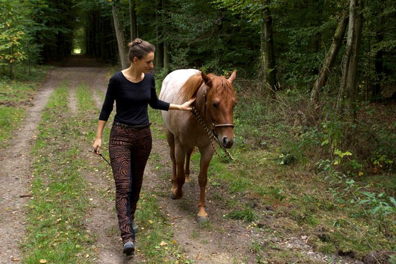 Führtraining mit dem Pferd! So gelingt dein Einstieg 6