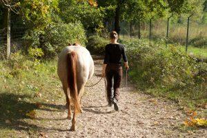 Entspannt im Gelände mit dem Pferd