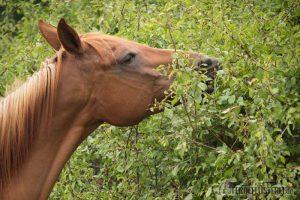 Kräuter fürs Pferd