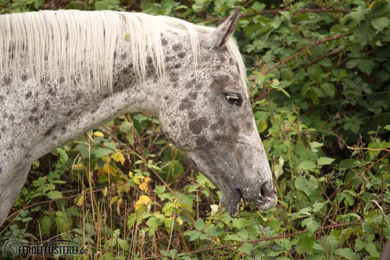 Top Kräuter fürs Pferd: Was du bei der Pferdefütterung beachten solltest &DH_92