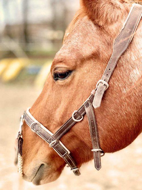 Kappzaum-pferd-sitz