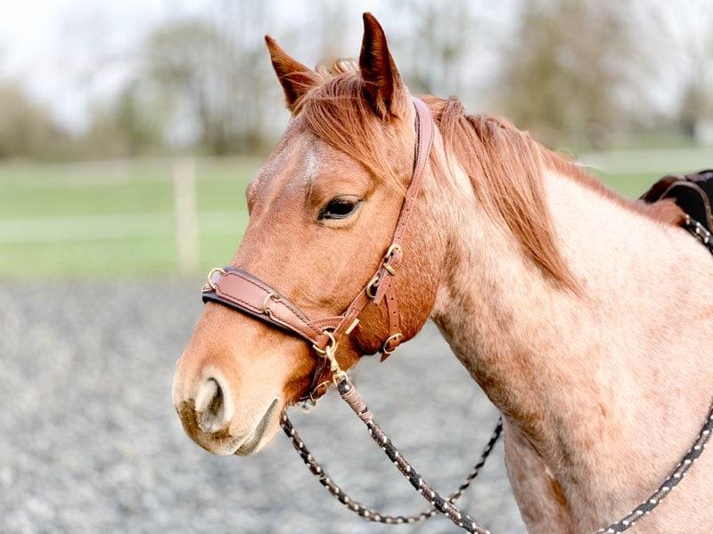 Kolik beim Pferd! Alle wichtigen Facts auf einen Blick 4