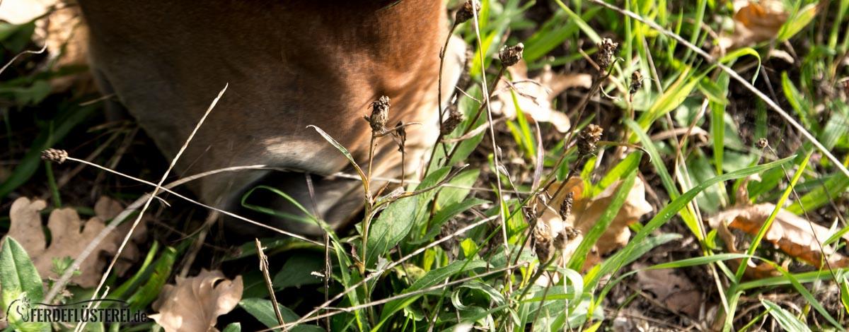 pferdefütterung gesund