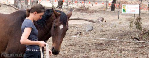 Quantum Savvy Horsemanship