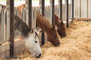 raufutter pferdefütterung