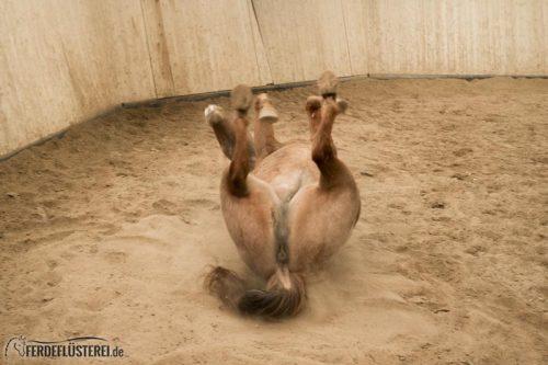 Pferd Wälzen